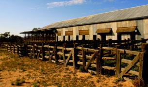 Kinchega-National-Park-Featured-Image