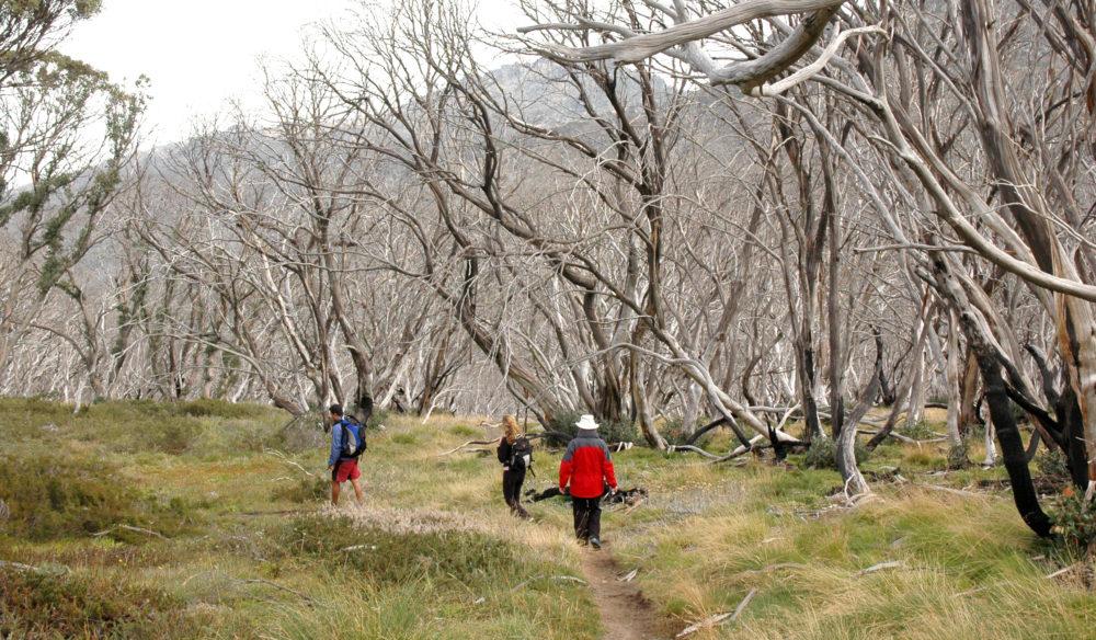 Bush walking on Mount Kosciusko