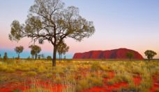 Uluru in the dry
