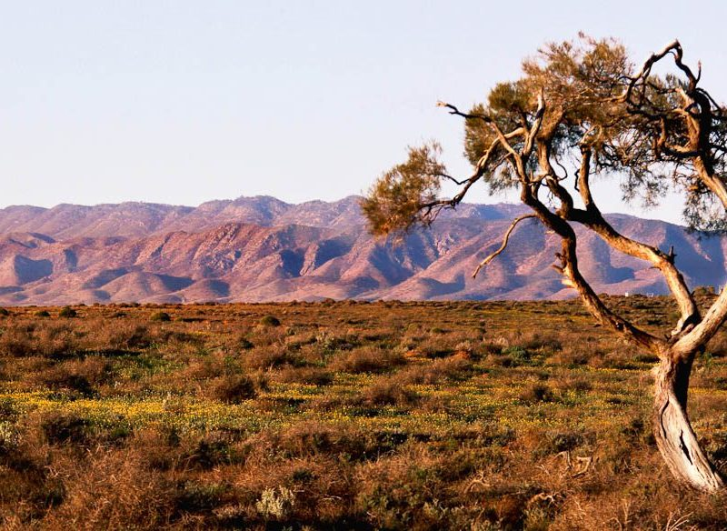 053 Flinders Ranges from Australian Arid Lands Botanic Garden