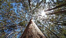 065 Boranup Forest, WA
