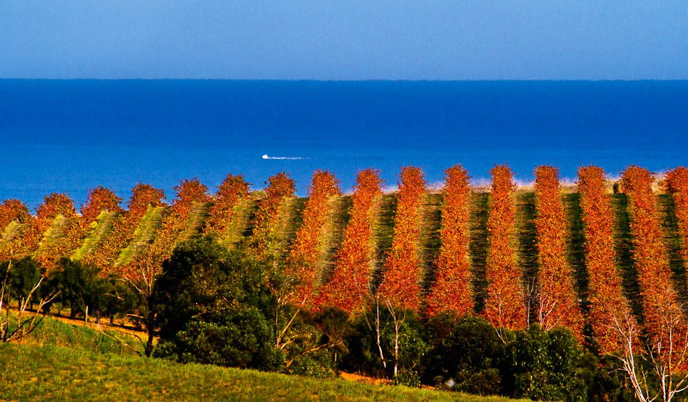 """Gently undulating hills are bathed in sunshine and cooled by sea breezes"" – Damien J Smith, Chapel Hill Winery"