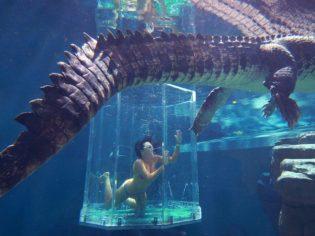 6c5fc8427 Swim with crocodiles with Crocosaurus Cove Darwin - Australian Traveller