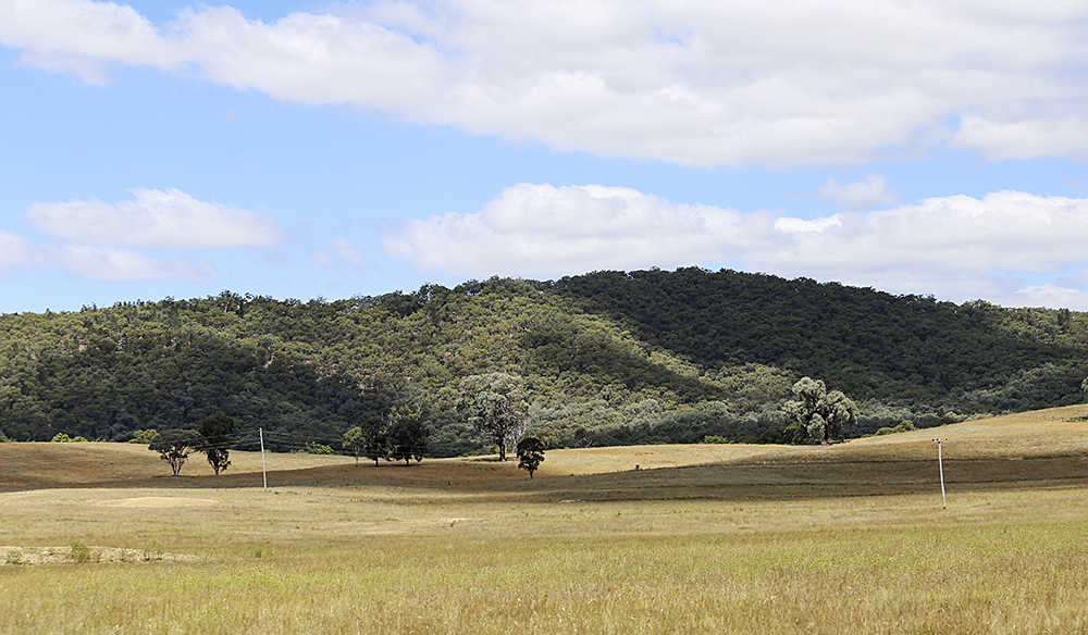 Rural scene near Mudgee,