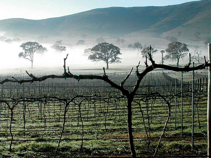 Some of Australias most magnificent vineyards are around Canberra.