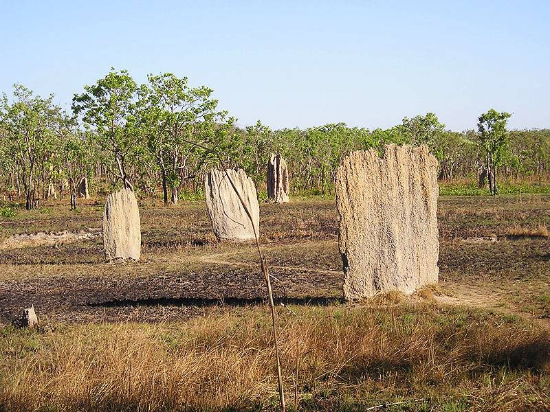 Magnetic termite mounds abound in Litchfield . . .