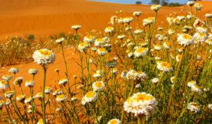 The picturesque Perry Sandhills