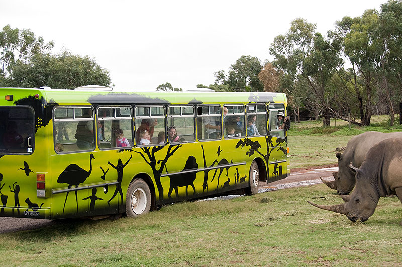 The Junior Safari is a fun-filled 35-minute bus tour for children, and they can bring Mum and Dad as well.