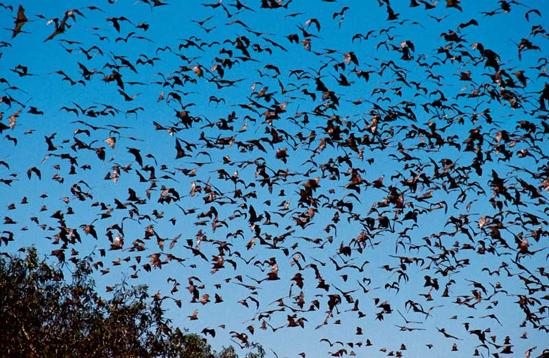 Plentiful flying foxes is right this is pure Indiana Jones territory.