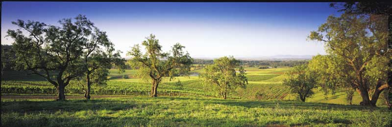 Drink among the worlds oldest grape vines. Image by Tourism NSW