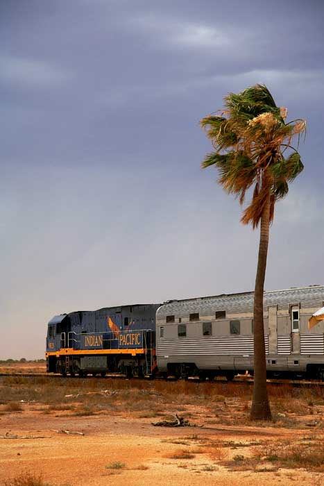 Track the straightest way to locomote: Nullarbor Plains. Image by Greg Barton