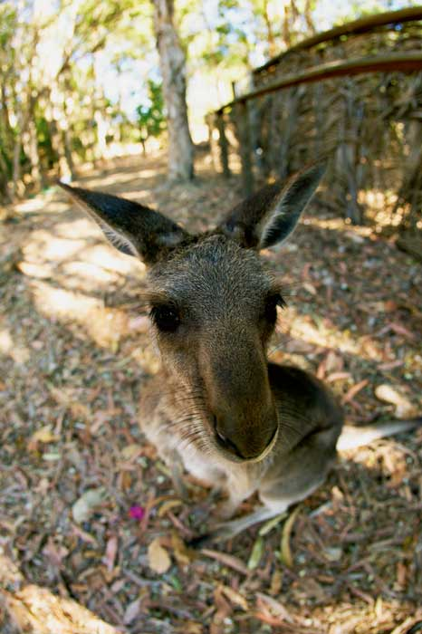 Roam with the most 'roos under one roof. Image by Tourism Queensland