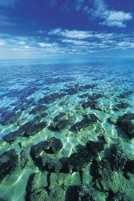 Visit your oldest ancestors at Shark Bay. Image by Tourism WA