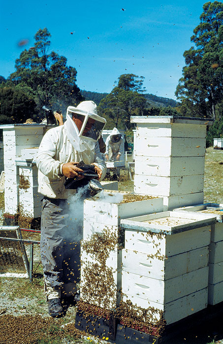 Sample some Heritage-listed Honey. Image by Tourism Tasmania
