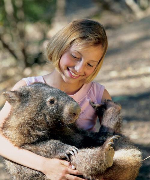 Spot the Wombat