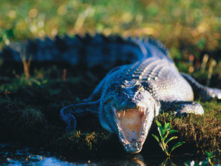 Tangle with the world's largest reptile, the saltwater crocodile. Image by Tourism NT