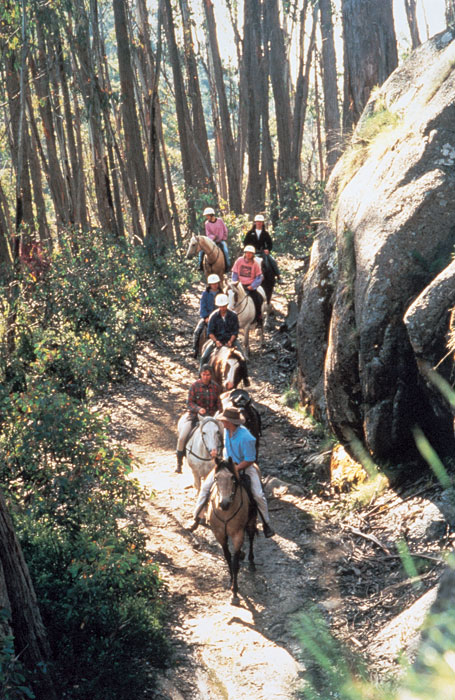 Follow the longest trail. Image by Tourism VIC