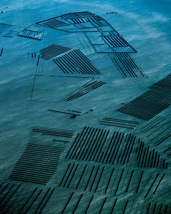 Oyster industry near Botany Bay, NSW. The grid pattern is formed by the oyster racks. Image by Richard Woldendorp