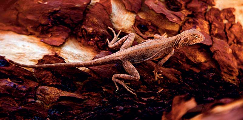 A tiny lizard hiding in the shade at Kings Canyon.