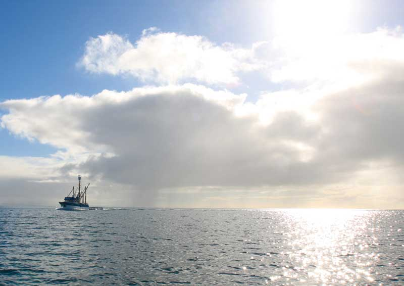 A tuna fishing boat  heading into Lincoln Marina through the never-ending drizzle. Image by Sol Walkling