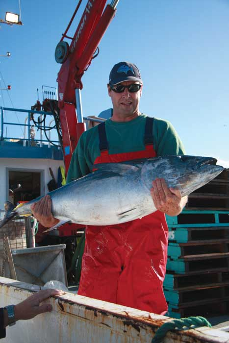 Freshly caught tuna - they can weigh up to 50kg. Image by Sol Walkling