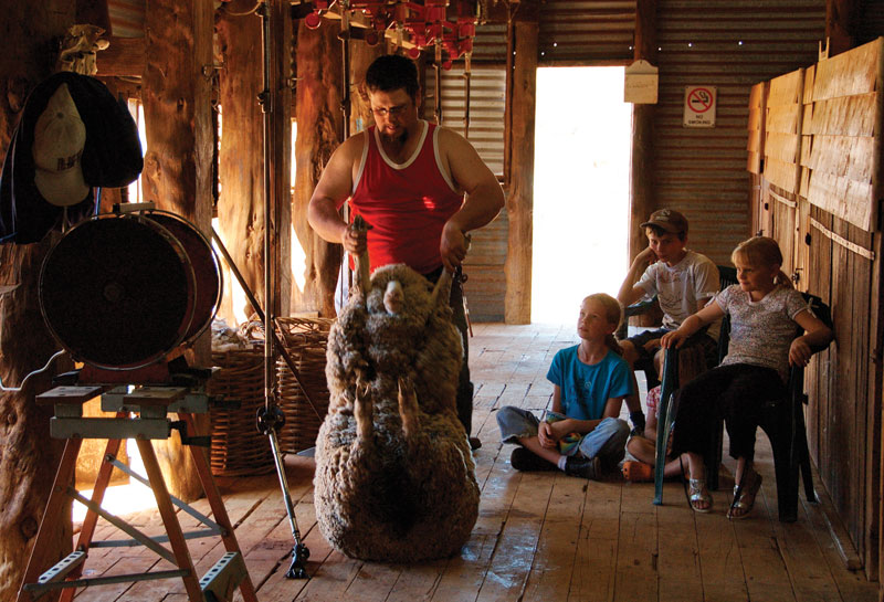 Shearing time at Turlee Station Stay. Image by Turlee Station Stay