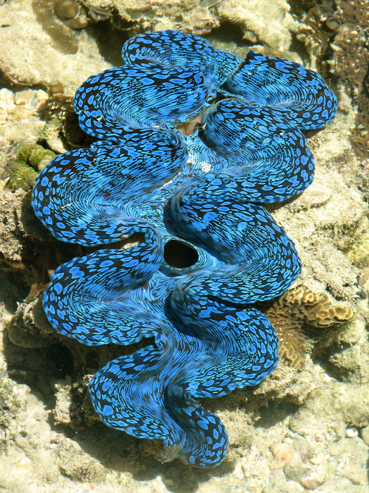 A different kind of vivid blue of the Arafura Sea. Image by Venture North