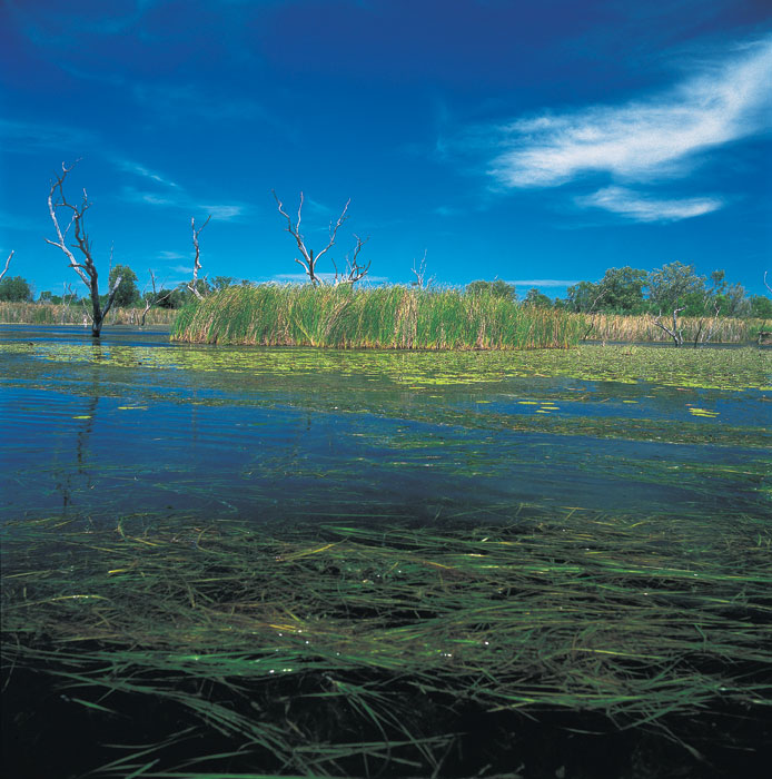 Marshlands of the Kimberleys. Image by Bill Peach Journeys
