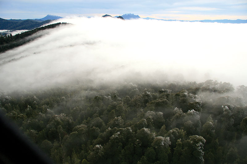 """Frosted rainforest in the upper Florentine Valley in Central Tasmania. At the moment there's blockage against logging. I went in a helicopter in winter 2008 to take pictures before the loggers moved in."" Image & words by Senator Bob Brown"