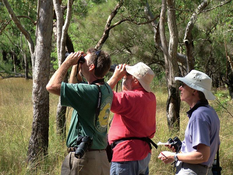 Bird watching in Cape York. Image by Wilderness Challenge
