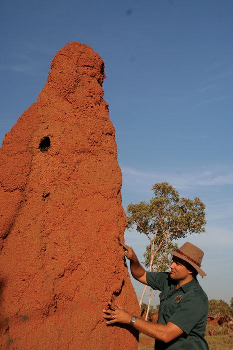 Termite mounds. Image by Kimberley Wild Expeditions
