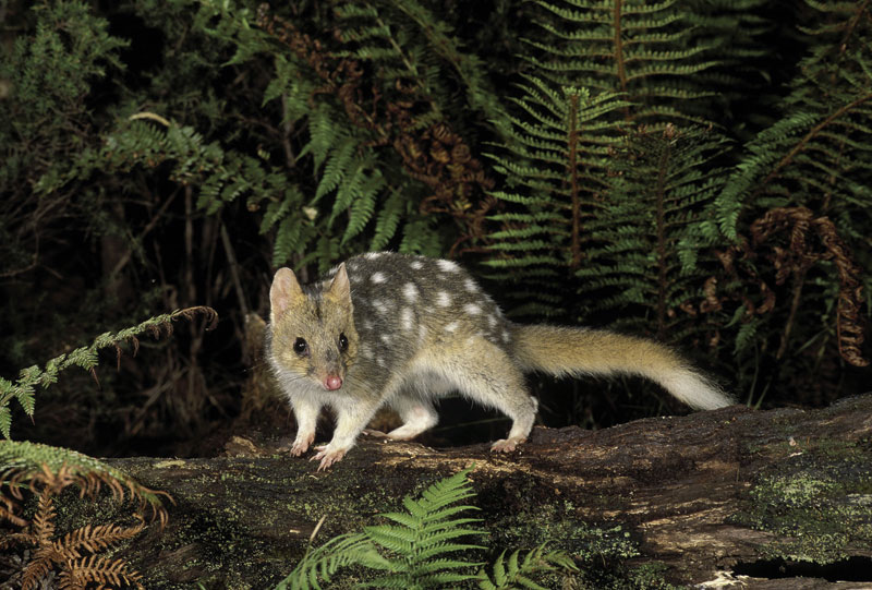 Nocturnal critters on the prowl. Image by Tourism Tasmania