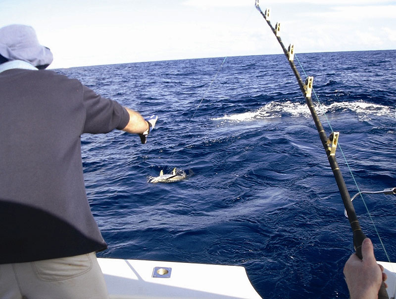 Deep Sea fishing just off Sydney's shore line. Image by Sydney Harbour Escapes.