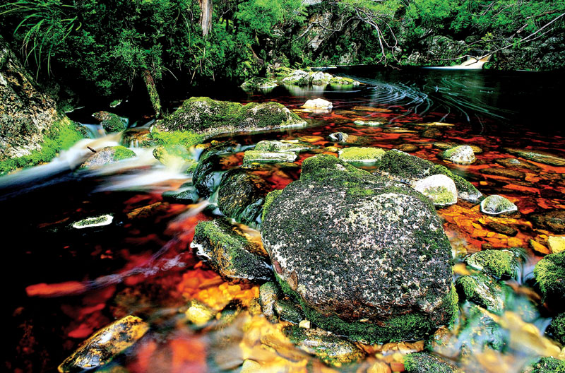Scenes from Tasmania's Gordon River Tributary, the site of perhaps Australia's most famous eco-action in the 1980s, led by Bob Brown. Image by Tourism Tasmania