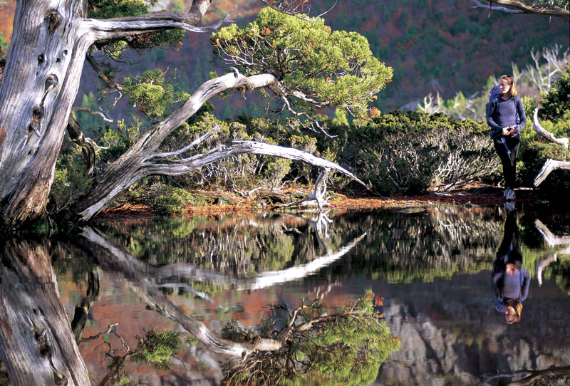 Tasmania's pristine Southwest National Park is an eco-tourism success story. Image by Tourism Tasmania