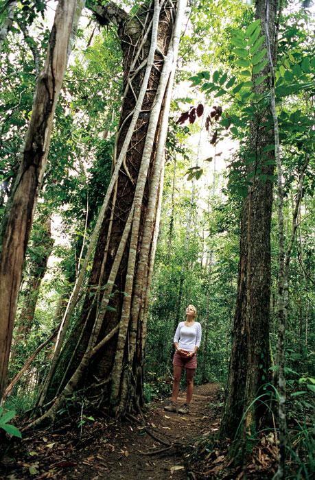 Back to basics. image by Tourism QLD