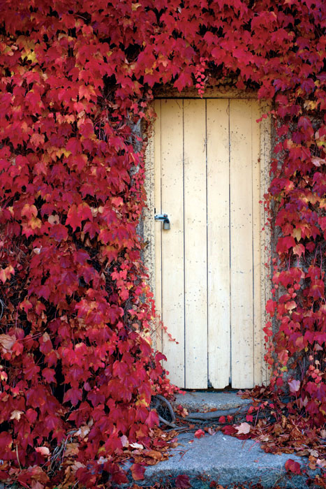 Autumn leaves at Beechworth's Black Springs Bakery. Image by Ewen Bell