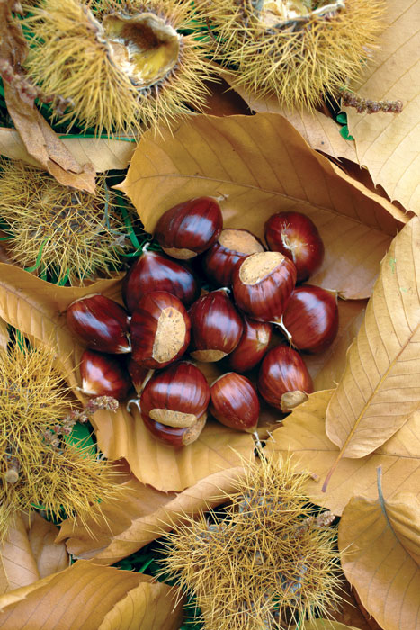 Fresh chestnuts sold on the roadside near Bright. Image by Ewen Bell