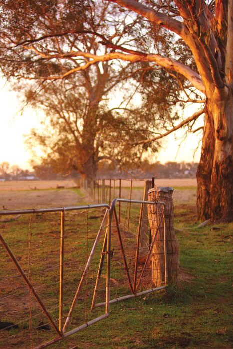 A pretty farm gate in Oxley, west of Milawa. Image by Ewen Bell