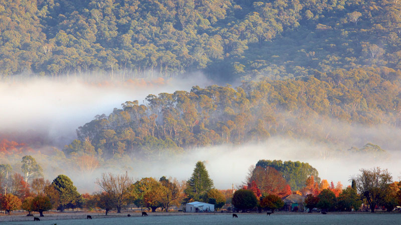 A beautiful foggy morning in Buckland, southwest of Bright. Image by Ewen Bell