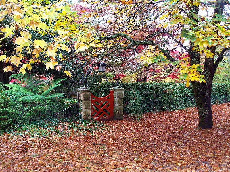 AT Reader Chris Galbraith was impressed by the beautiful autum scenery on display at Mt Wilson