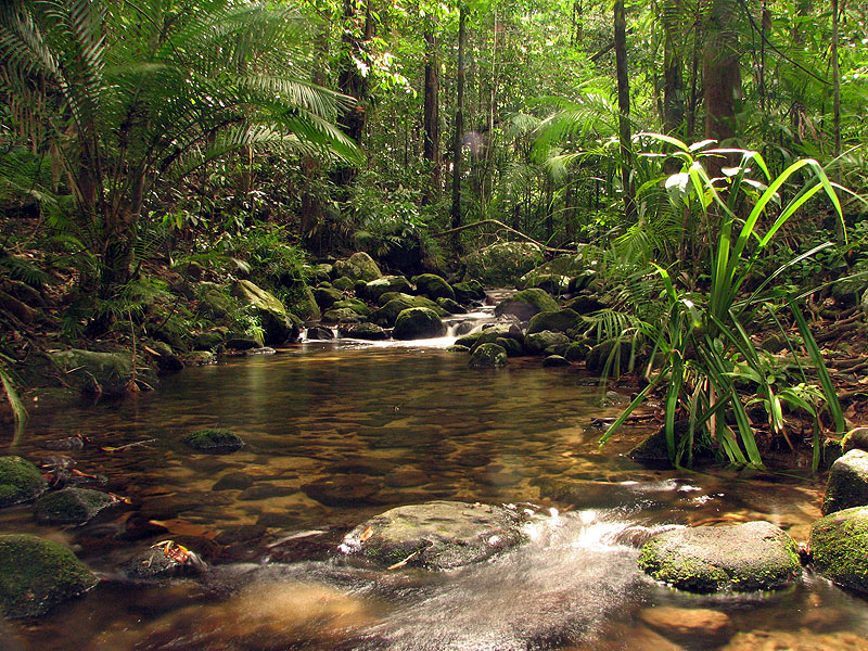 Mossman Gorge in the Cairns Hinterland Region was a stunning site for AT Reader Stewart Frost