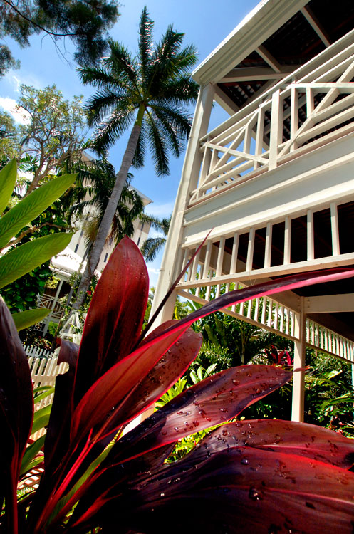 The tropical garden full of fuchsia frangipani.