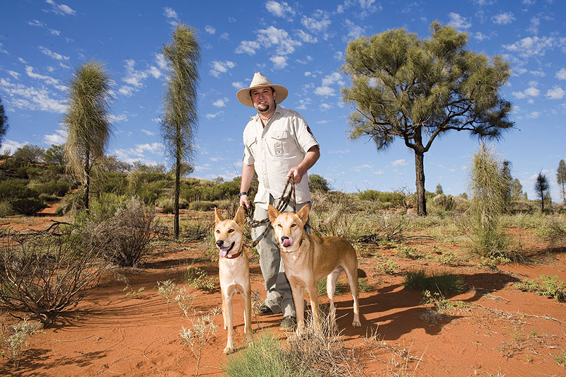 Encounter of the first kind, meeting dingoes under the watchful eye of predator specialist Wade. Image by Grenville Turner