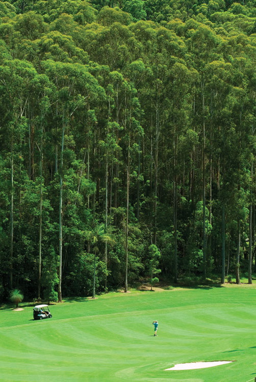 The perfection of Augusta-like Bonville and its rows of majestic gumtrees.