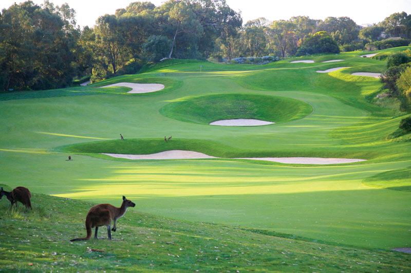 Crazy bunker action on Joondalup's Quarry course.