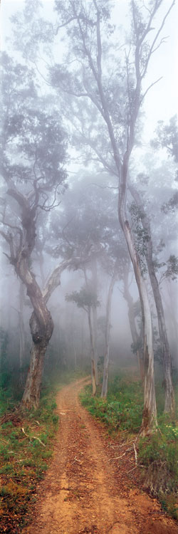 Forest Gateway, Vic, portrait of a road less travelled