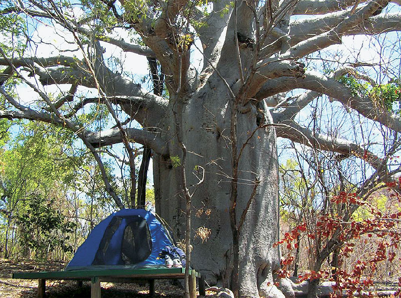 "The perfect Kimberley sleeping platform, affectionately known to locals as ""boab camp""."