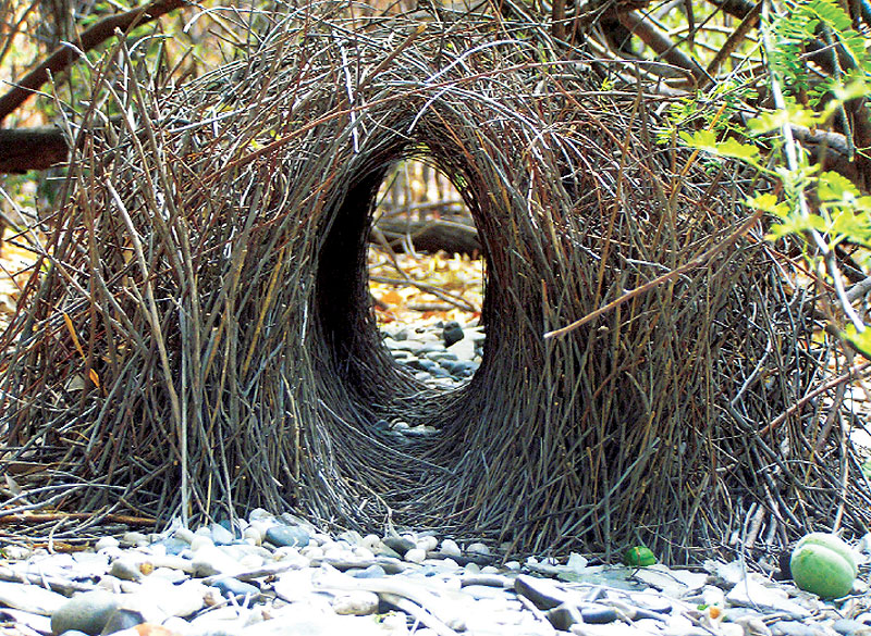 A Bowerbird's clever bower, located just a short distance from boab camp.