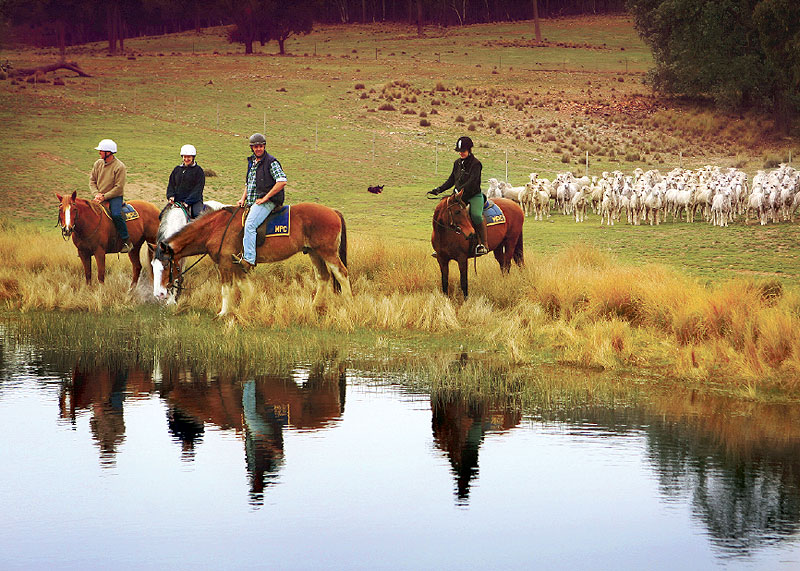 Explore the trails near Murrumbateman with Burnelee Excursions on Horseback.